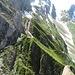 Der Laiblibetterlöchliweg führt von dieser Stelle aus unter den Felswänden der Fählentürme hinüber zum Löchlibettersattel, wo man auf den Wanderweg trifft, der vom Altmannsattel herunterkommt. Zunächst geht es unter senkrechten Wänden hindurch über Schrofen zu einigen markanten braunen Rinnen.