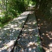 """vecchie rotaie sul sentiero """"Trecciolino"""""""