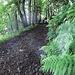 Zum Glueck geht's erstmal durch einen kuehlen Wald. Das Wetter ist heute naemlich fuer Schottland uncharakteristisch schwuel-warm.