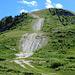 der letzte Abstieg nach Thyon. Das ist die Skipiste, eine Narbe in der Natur. Der Abstiegsweg führt links am Waldrand vorbei