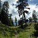 lungo il sentiero nel bosco