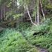 Aufstieg durch üppigen Wald.