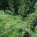 Dann geht es weglos und etwas hakelig nach Norden hinab in die Senke zwischen Wilden Fräulein und Jägerkamp, den Weg muss man erahnen