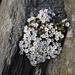Geniale Nachsicht: Pflanzen Power auf über 3200m