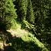 auf dem Waldweg zur Intschialp