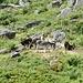 ein paar Esel geniessen den Sonnenschein auf der Alp da Punteglias