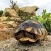 Auf der Insel soll es auch Schildkröten geben (Photo in der Nähe von Palau gemacht).