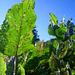Blacken – haushoch und saftig grün