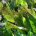 Wie schön können doch auch unansehnliche Pflanzen aus dem richtigen Blickwinkel sein! (Foto [U sglider])