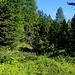 Der idyllische Bergwald oberhalb von Arolla.