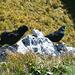 ......herrliche Berge, sonnige Höhen, …    …Bergvagabunten sind wir, ja wir …