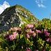 Hier oben hat es eine schöne Blumenvielfalt