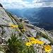 Blumen mit hübschem Ausblick