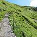 auf dem Abstieg von der Chinzig Chulm (Sicht nach oben)