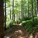 Für diese Gegend ungewöhnlicher Laubwald
