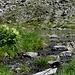 Abflussstelle des Gafiersees. Hier hab ich den Rest meines Leitungswassers gegen kühles Bergwasser ausgetauscht. Ich bin jetzt 10 Jahre jünger. ;-)