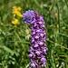 Violette Schönheiten am Wegrand (I)