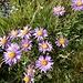 auffällig farbige Blumen ...