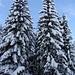 Endlich hat es den lang ersehnten Schnee - Weihnachten kann kommen!