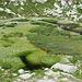 Sumpfgebiet mit viel Wollgras
