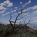 Sträucher auf dem Frary Peak Vorgipfel
