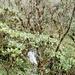 Aufstieg durch den Regenwald (ca. 2800 m.ü.M.)