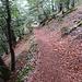 zum Teil schöne und weiche Waldwege