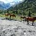 Pferde auf der Surettaalp