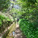 Levada im Kastanienwald