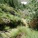 Der Aufstieg ist mit Ketten, Hilfstritten im Felsen und U- förmigen Eisen sowie einer kurzen Leiter bestens gesichert