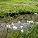 Der Ratoser Stein wird von vielen Feuchtwiesen umgeben