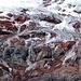 Gletscher und Fels am Chimborazo