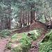 Emiliano e il bel bosco