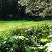 Das wirklich grüne Grüenseeli