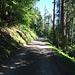 Gleichmässige Steigung durch schöne Wälder