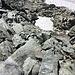 Auch der Abstieg vom Chli Chärpf zur Chärpfscharte ist markiert und an der steilsten Stelle mit Fixseil ausgestattet