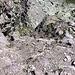 Hier wäre die Abzweigung nach links zum Kamin, in welchem wir aufgestiegen sind (Eisenstange)
