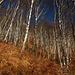 Attorno ai 1000m di quota i castagni lasciano spazio alle betulle.