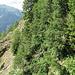 Rive droite du Bächigrabe. En raison de la chute de certains arbres, le sentier, qui passe en bas de la photo, est difficile à distinguer. Mais ça passe!