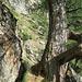 A gauche de l'arbre, le sentier sort d'une petite cheminée (peu visible ici).