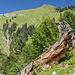 Eine landschaftliche Toptour neigt sich dem Ende. Rückblick zum Älpelekopf.