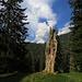 Geisterbaum mit Hochblasse / Il spirito dell`albero vecchio con la Hochblasse sullo sfondo