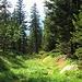 Ultimi metri di sentiero nel bosco.