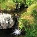 Il torrente che scende da Pian Cales.