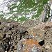 Die ersten Meter im Abstieg vom Gulderturm entlang der Normalroute.