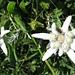 ... doch diese zwei (die einzigen, welche wir sichteten) übertreffen die Blumenpracht