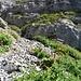 Es geht auf dem Wanderweg weiter hinauf Richtung Chäserugg, und dort, wo der Weg an einer großen, rot-weißen Markierung im Fels verschwindet...