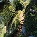 Es geht auf schmalem Weg an Felswänden entlang und im Wald hinunter.