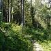 Auf diesem Weg kam ich aus dem Wald.