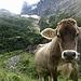 Links der Kuh geht's hoch. Vielleicht empfiehlt es sich, die Karte oder Markierungen anstelle der Kuh als Referenz zu nehmen.